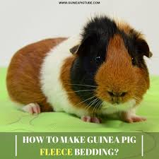 how to make guinea pig fleece bedding