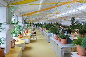 plants for office space. delighful office selgascano throughout plants for office space t