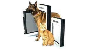 doggy door ideas best dog automatic reviews for pets doorbell electronic guillotine doors diy