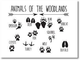 Accent your little one's woodland bedroom or nursery with our animal tracks poster. Amazon Com Dayanzai Animal Tracks Woodland Nursery Wall Art Canvas Print Animal Footprints Field Guide Painting Picture Kids Room Wall Art Decor 50x70cm No Frame Posters Prints