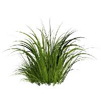 grass png. Simple Grass Grass Png Image Green Picture PNG To