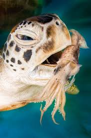 Sea Turtle Bathroom Accessories 17 Best Images About Sea Turtles On Pinterest Sea Turtles Sea