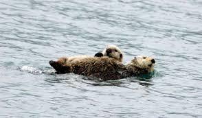 Kayaking In Alaskan Seas Rewards Paddlers With Spectacular
