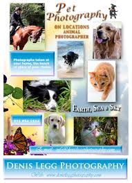 Pet Poster Denis Legg Photography Pet Photography Port Alfred And 24