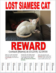 Missing Cat Poster Template Missing Cat Poster How To Make A Lost Cat Poster