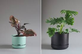 MrKitly-Decor-Planters-01.jpg