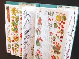 Flower Species Chart What Plant Is That Ingenious Efforts To Make Identification
