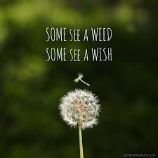 Dandelion Quotes
