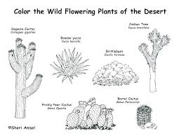 desert animals coloring pages desert animals coloring pages animal desert animals coloring pages printable