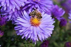 what flowers don t attract bees