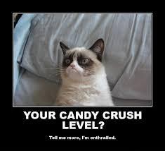 grumpy cat quotes frozen. Modren Quotes On Grumpy Cat Quotes Frozen N