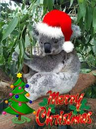 198 best Aussie Christmas images on Pinterest | Koalas, Merry ...