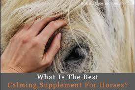 Best Calming Supplement For Horses 2019 Nervous Anxious