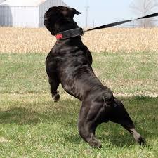 carpet mill dog. carpet mill dog