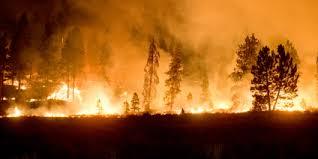 Wildland Fire Us Forest Service