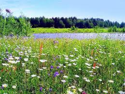 Как нужно вести себя на лугу  Прошли те времена когда мы смотрели на лес луг реки и озера исключительно только потребительски Уже давно пора понять что нетронутой природы осталось