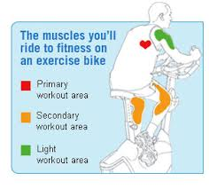 exercise bikes workout muscles