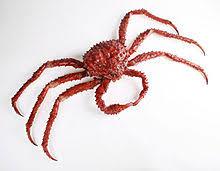 King Crab Leg Size Chart King Crab Wikipedia