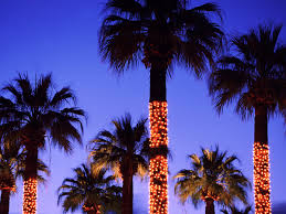 outdoor up lighting for palm trees lighted 4 5 deluxe