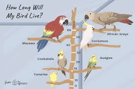 Baby Bird Age Chart How Long Do Parrots And Other Pet Birds Live