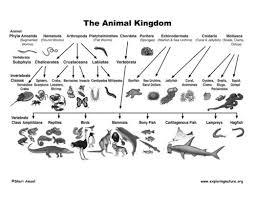Animal Kingdom Taxonomy Chart Educational Models Amoeba Fiber Model Manufacturer From Ambala