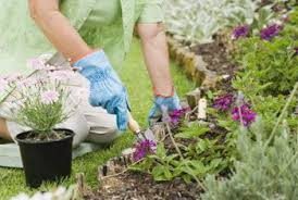 how to plant a flower garden. A Flower Garden Can Include As Many Colors You Like. How To Plant N