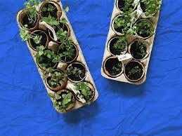 growing vegetables indoors 8 veggies