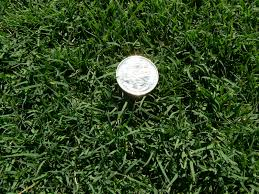 Grass Couch Nullarbor Couch Grass Buy Turf Online Greener Lawn Sydney