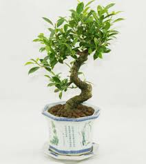 small plants for office. enchanting small office plants 105 indoor for desk awesome great k