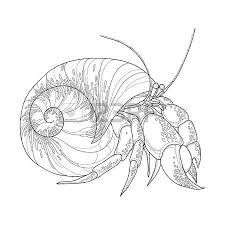 55533918 vector illustration of hermit crab in the round gastropod shell isolated on white background underwa?ver=6 228 outline crayfish cliparts, stock vector and royalty free on crayfish worksheet