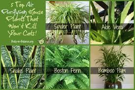 Extraordinary House Plants Safe For Pets Photos - Best idea home .