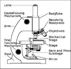 Parts of a Microscope Worksheet | Download a