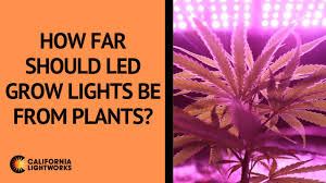 How Close To Keep Led Grow Lights How Far Should Led Grow Lights Be From Plants California