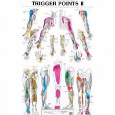 Canine Trigger Point Chart Acupuncture Trigger Points Chart Best Picture Of Chart
