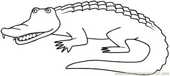 Small Picture Alligators Coloring Page Free Alligator Coloring Pages