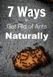 Little Black Ants In Kitchen 7 Ways To Get Rid Of Ants Naturally