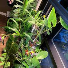 Growing Orchids Under Led Lights Tips For Buying Measuring Evaluating Led Grow Lights For