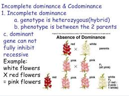 To understand the meaning of codominance, we will have to learn what dominance is. Define And Give An Example Of Incomplete Dominance And Codominance