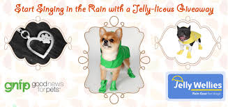 Cold Weather Is Here Protect Your Pets With Jelly Wellies