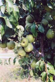 374 Best Edible Landscaping Images On Pinterest  Plants Fruit Tree Nursery North Carolina
