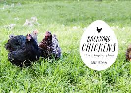 A Guide To Feeding Chickens U2013 PoultryOne Guide To Raising Backyard How To Keep Backyard Chickens
