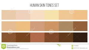 Skin Tone Color Palette Q House Pl