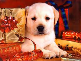christmas puppies wallpaper.  Puppies Christmas Puppies Wallpaper Intended