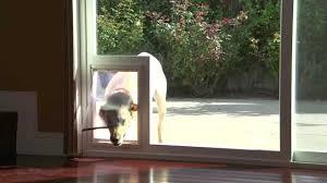 danjo patio sliding door with built in pet access they design regarding dog door for sliding glass door build a dog door for sliding glass door