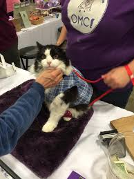 Super Pet Expo – occupation: cat lady