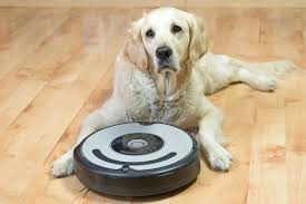 a golden retriever sitting on a wood floor with a robotic vacuum