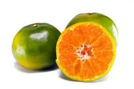 orange fruit names. Unique Names Orange Fruit Other Names Are Les Oranger Sweet Orange Citrus Sinensis  Citrus Throughout Fruit Names R