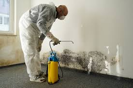 does painting over mold stop its growth