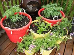 Small Picture Backyard Pictures Vegetable Gardening Containers Pots In Ideas