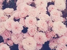 pretty floral tumblr backgrounds. Tumblr Flowers Hintergruende Backgrounds Flower On Pretty Floral Pinterest